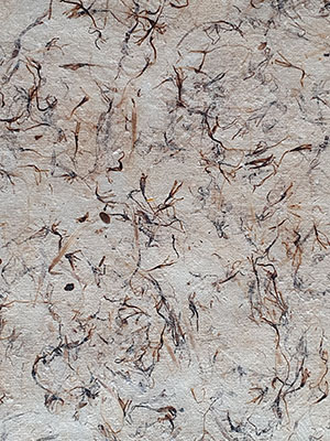 Papier végétal de chardon sauvage