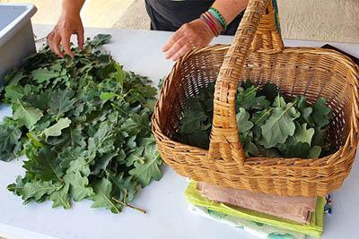 stages fabrication papier végétal - cueillette plantes