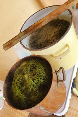 stages fabrication papier végétal - cuisson plantes
